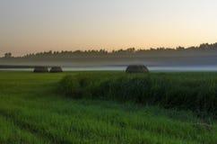 Туман осени Стоковое Изображение