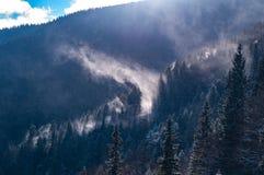 Туман поднимает над лесом стоковое фото rf