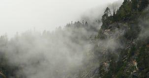 туман поднимая в утро, деревья горы 4k тумана, Bomi County, Тибет акции видеоматериалы