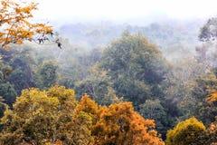 Туман поднимая в утро над лесом, деревья, как страна чудес Стоковая Фотография