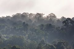 Туман поднимая в утро над лесом, деревья, как страна чудес Стоковые Изображения RF