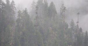 туман поднимая в утро, сосны горы 4k тумана, Bomi County в Тибете видеоматериал