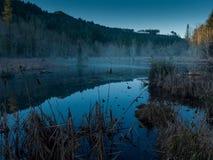 Туман после полудня на пруде Стоковое Изображение