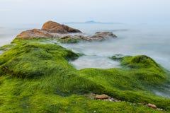 Туман распространенный над морской водорослью стоковое изображение