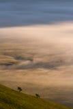 Туман рассвета стоковое изображение rf