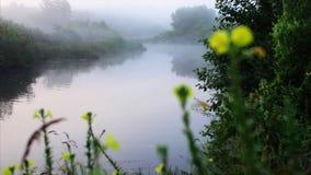 Туман реки утра и красивые flovers акции видеоматериалы