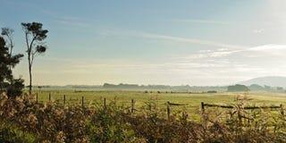 туман сельскохозяйствення угодье росы Стоковая Фотография RF