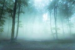 Туман сказки в лес Стоковые Изображения RF