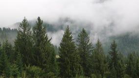 Туман среди зеленых деревьев сток-видео