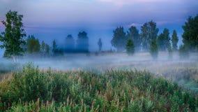 Туман утра в лесе Стоковая Фотография