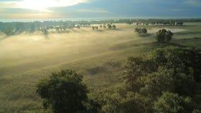 Туман утра в солнце видеоматериал