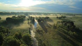 Туман утра в солнце акции видеоматериалы