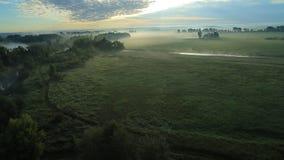 Туман утра в солнце сток-видео