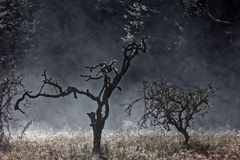 Туман утра или тлея лесной пожар с росой подсвеченной на траве стоковые изображения