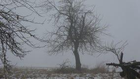 Туман утра конца зимы темный в покинутом саде акции видеоматериалы