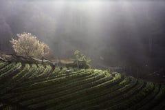 Туман утра на горе Стоковые Изображения RF