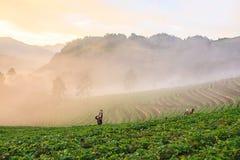 Туман утра на горе Стоковое Изображение