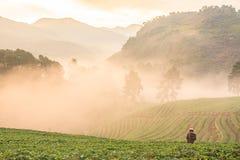 Туман утра на горе tha Стоковое Изображение