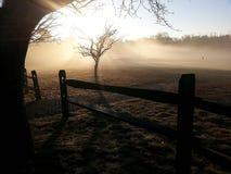 Туман утра Стоковые Фото