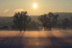 Туман утра Snowy стоковые изображения