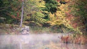 Туман цветов и раннего утра осени на спокойном реке видеоматериал