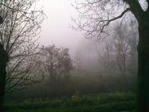 туман Стоковые Изображения