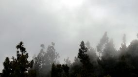 туман видеоматериал