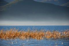 туман bund стоковое фото rf