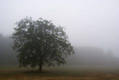 туман chianti стоковые изображения rf