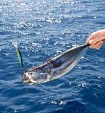 туна стоковые изображения rf