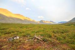 Тундра в субполярном Урале с взглядами гор на горизонте и древесине на переднем плане Стоковое Фото