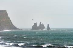 Тупики летают около стогов моря Reynisdrangar стоковое фото