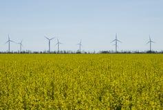 Турбины энергии ветра на предпосылке неба захода солнца, природе генератора энергии дружелюбной Поле сурепки весны желтое Стоковое Изображение