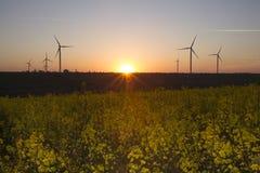 Турбины энергии ветра на предпосылке неба захода солнца, природе генератора энергии дружелюбной Желтое поле сурепки Стоковое Изображение RF