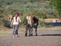 Турецкая женщина страны с коровой Стоковые Изображения RF