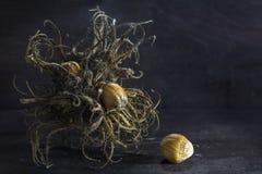 Турецкие фундук, группа плодоовощ щетинки и гайки на темное деревенском Стоковые Изображения