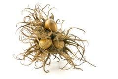 Турецкий фундук, bristly группа плодоовощ и гайки, isola крупного плана Стоковая Фотография