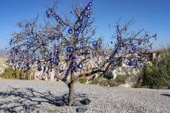 Турецкое дерево глаза стоковые фотографии rf