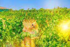 Туризм Калифорнии виноградника стоковая фотография