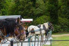 Туризм много лошадей экипажа стоковое фото rf