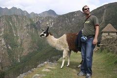 Туристская встреча уроженец camelid guanicoe лама гуанако к Южной Америке, Machu Picchu Перу стоковые фотографии rf