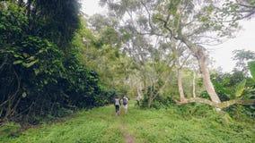 Туристские пары идя в тропический лес на зеленых деревьях и ландшафте тропических заводов Путешествующ человек и женщина идя внут сток-видео