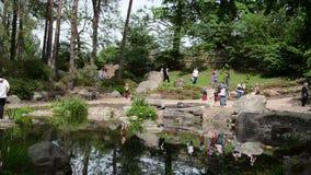 Туристские люди принимают фото около пруда и заводов в парке акции видеоматериалы