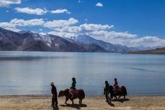 Туристские яки катания около озера Pangong (Tso Pangong) Стоковая Фотография RF
