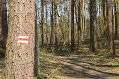 Туристский знак трассы на дереве Стоковые Изображения RF