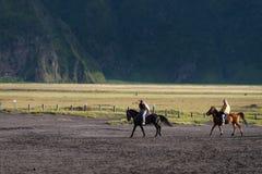 Туристский идти верховой лошади Стоковые Фотографии RF