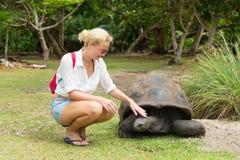 Туристское подавая Aldabra гигантские черепахи на острове Curieuse, Сейшельских островах Стоковое Фото