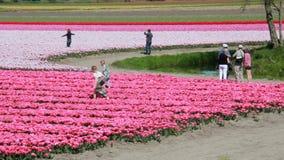 Туристы в поле цветка в Голландии сток-видео