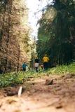 Туристы в прикарпатском лесе взбираются к горе стоковые изображения