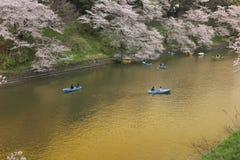 Туристы гребя шлюпку весело на Сакуре стоковая фотография rf
